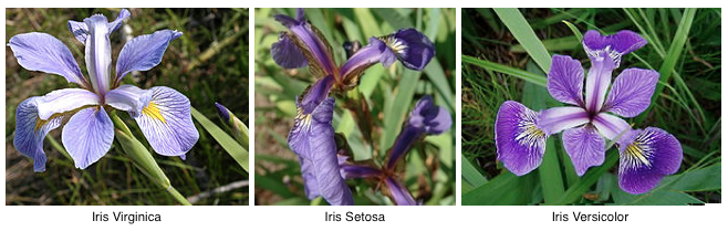 ../../_images/dataset-iris-flowers.png